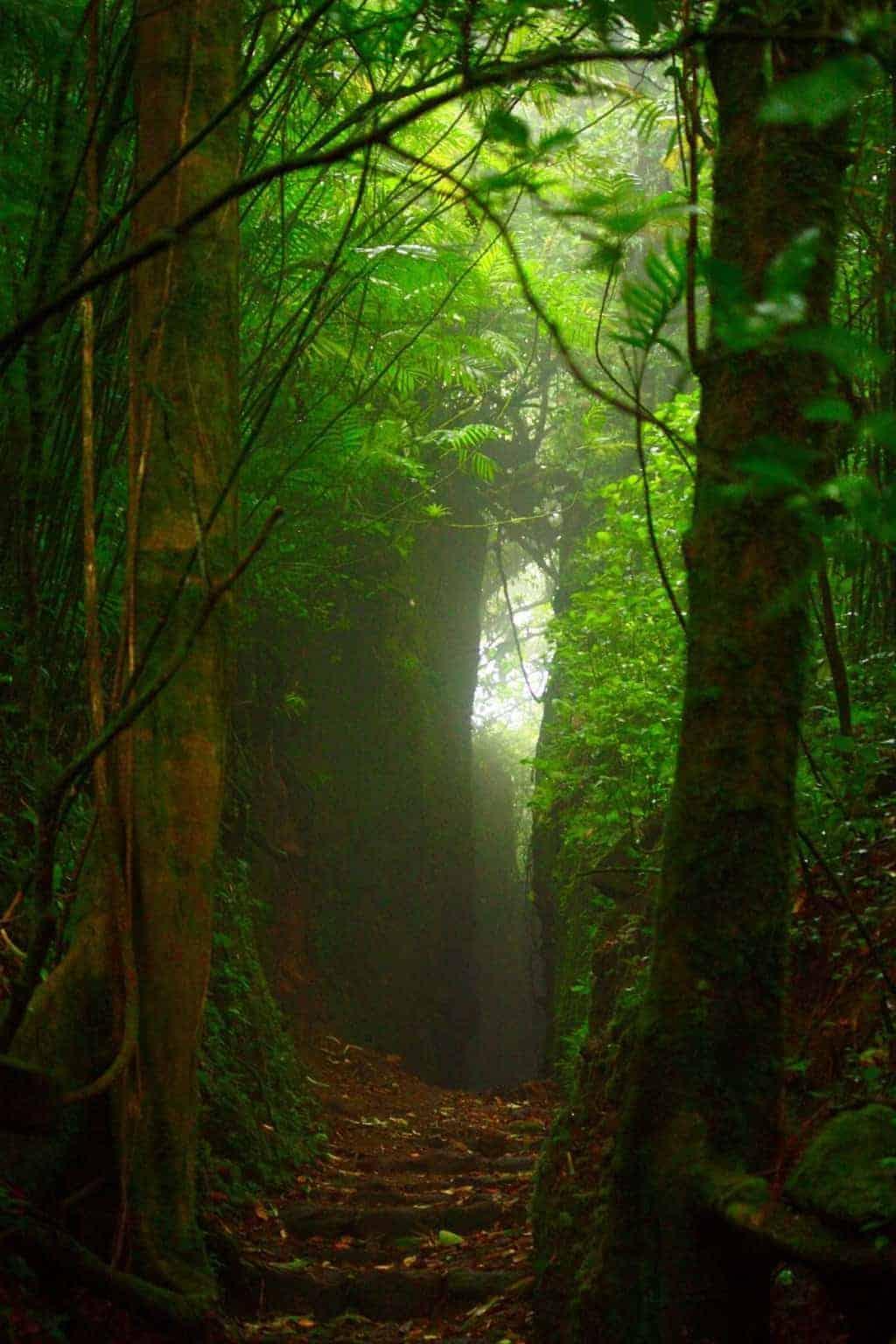 Mombacho Volcano Cloud Forrest. NIcaragua
