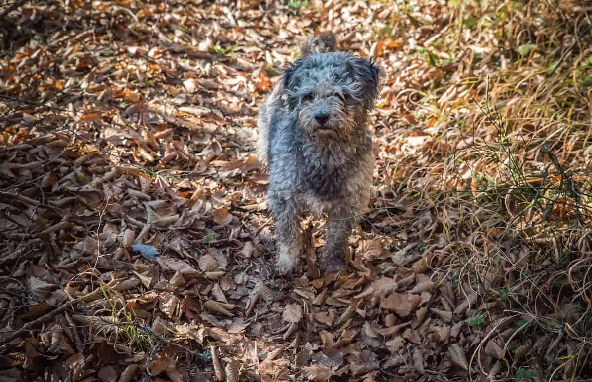 Sprocket - Rescue Dog Road Trip
