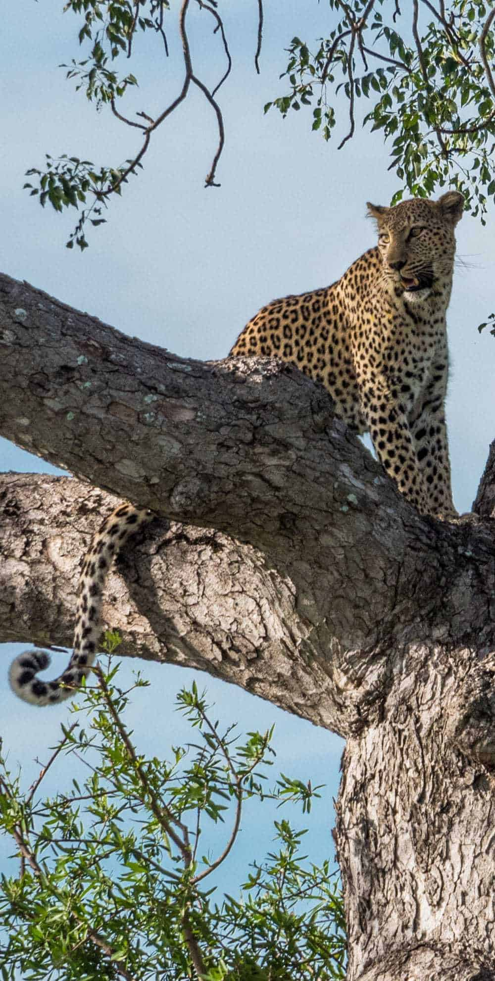 Finding the Big Five with a full day Private Kruger Safari