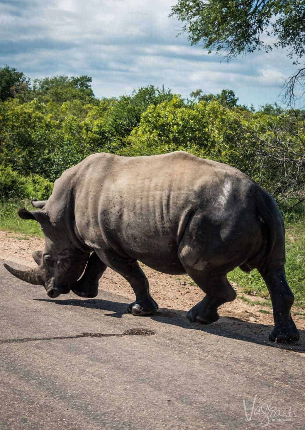 A full day private safari is a great way to experience Kruger National Park