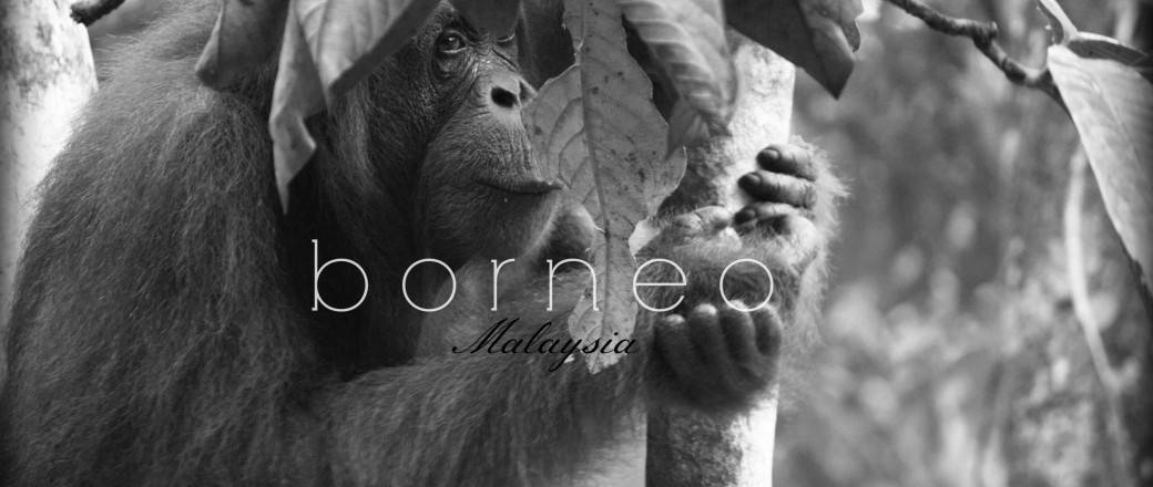 A Snapshot of Malaysia's Borneo.